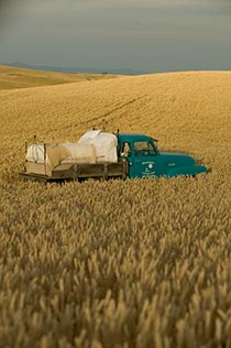 Bed set up on turquoise flatbed truck out in field of wheat